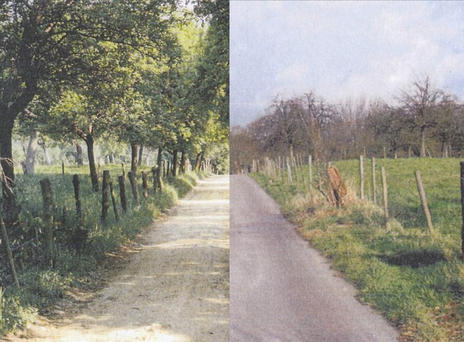 Verandering van de hoogstamboomgaard: links: 1970, rechts: nu